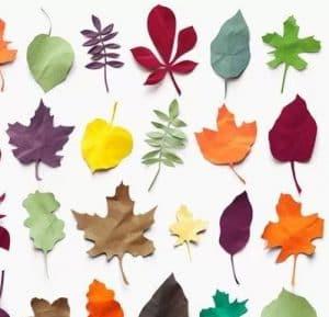 14 cara membuat hiasan dinding dari kertas mudah dan sederhana cara membuat hiasan dinding berbentuk tumbuhan dari kertas origami adalah thecheapjerseys Gallery