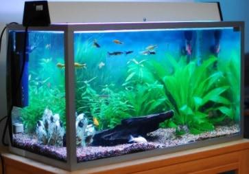 9200 Ide Desain Aquarium Ukuran Besar HD Terbaik Unduh Gratis