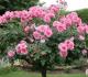 9 Cara Merawat Bunga Di Taman Agar Tumbuh Dengan Baik