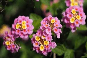16 Jenis Bunga Untuk Taman Rumah Paling Cocok