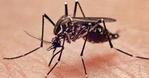 cara membasmi nyamuk