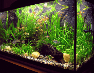 cara-menjernihkan-air-aquarium