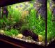 5 Cara Menjernihkan Air Aquarium Secara Alami Yang Keruh Agar Jernih