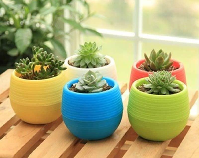 Cara Menanam Kaktus Mini Sebagai Tanaman Hias