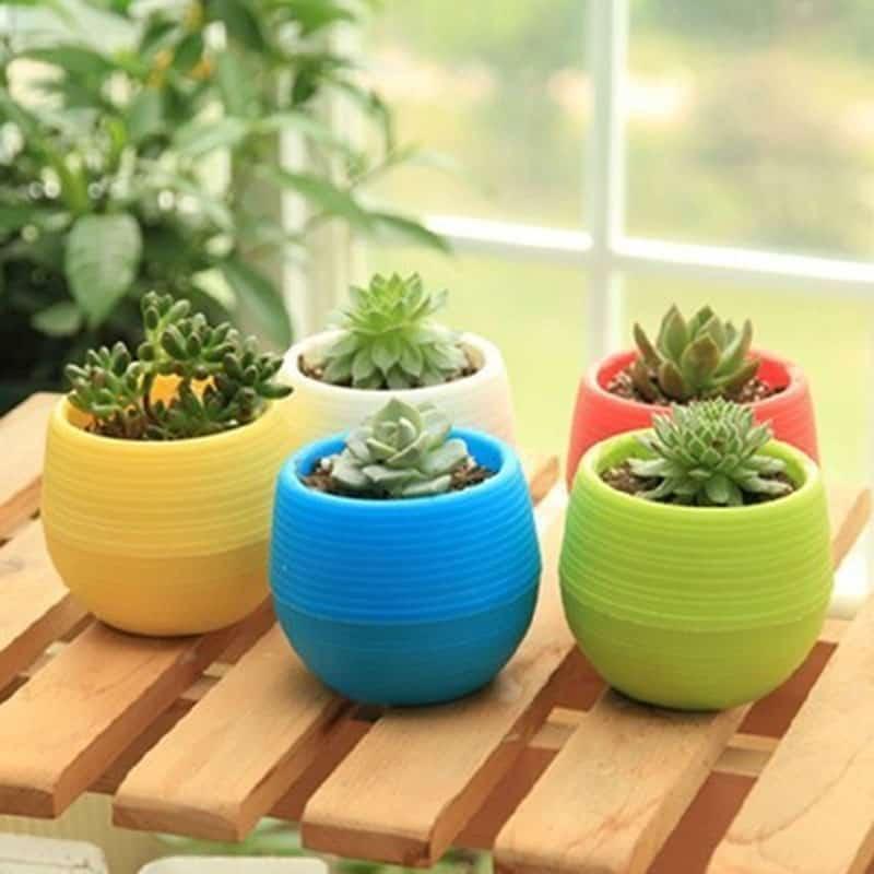 Cara Menanam Kaktus Mini Sebagai Tanaman Hias Rumahlia Com