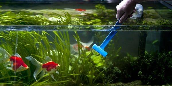 5 Cara Membersihkan Kaca Aquarium dari Kerak