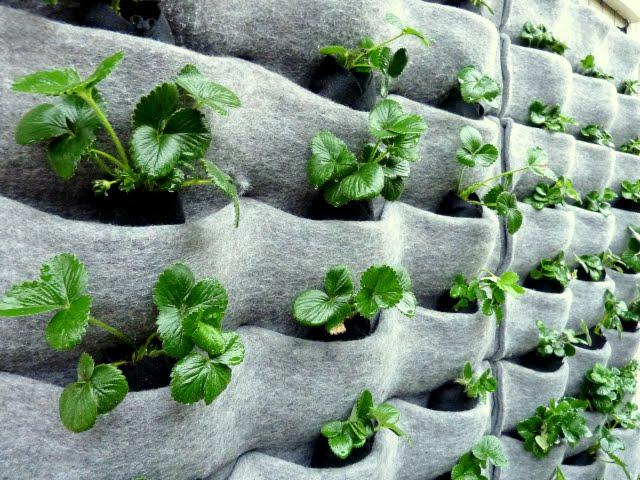 5 Cara Membuat Vertical Garden Sistem Kantong