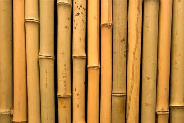 Mengenal Jenis Bambu untuk Konstruksi Bangunan