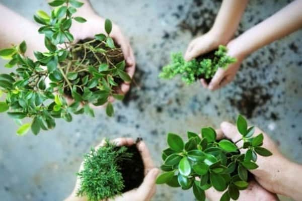 Cara Membuat Lubang Biopori yang Baik dan Benar