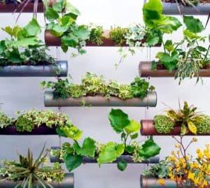 vertical garden pipa