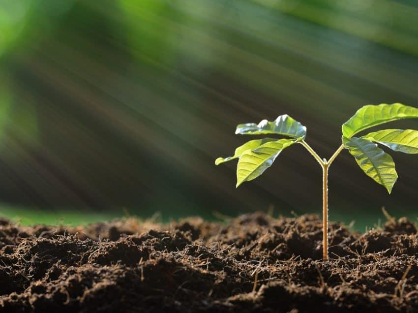 Mengintip 6 Manfaat Lubang Biopori pada Hunian