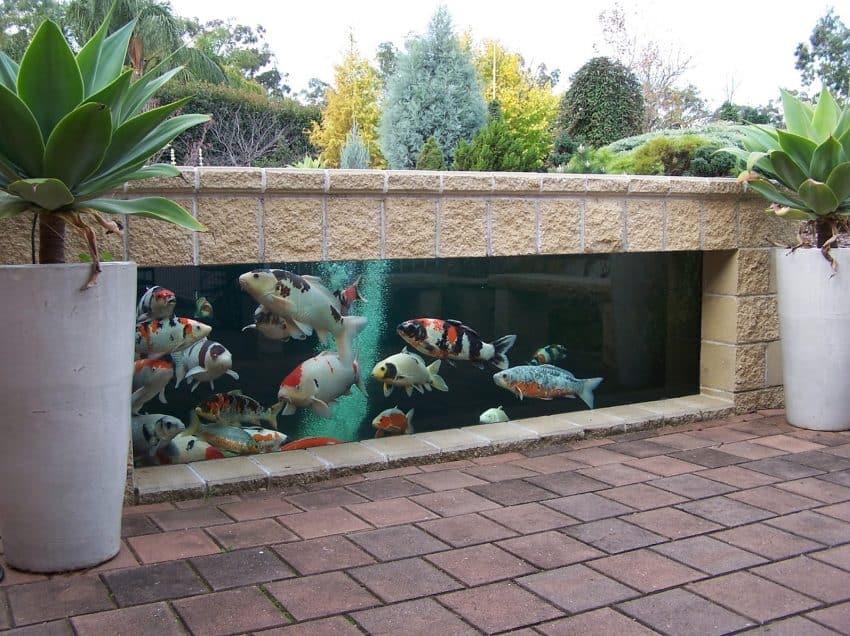 Mengintip 4 Cara Membuat Kolam Ikan Hias