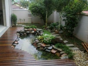 lumut kolam