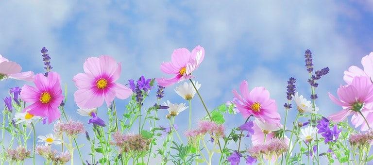 6 Cara Menata Bunga di Teras Rumah Paling Unik