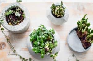 pot bunga beton Halaman merupakan salah satu elemen penting di berbagai  jenis-jenis rumah tinggal. Rumah tinggal yang memiliki area hijau  menandakan ... 3d18786bee