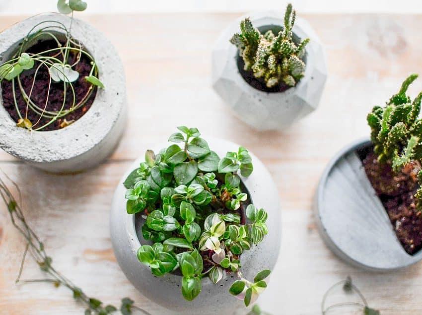 Mengintip 7 Cara Membuat Pot Bunga Beton