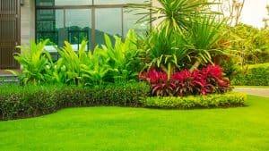 rumput rumah