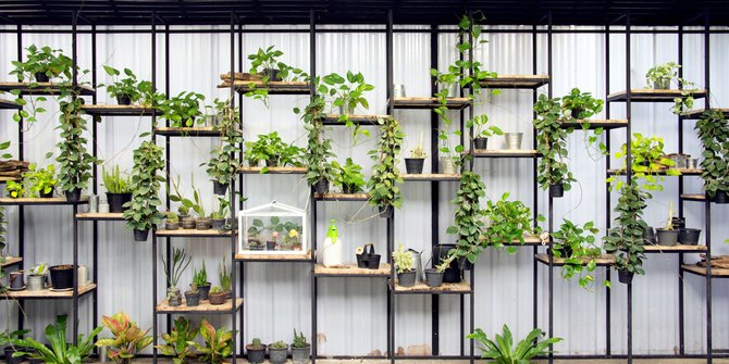 merawat taman vertikal
