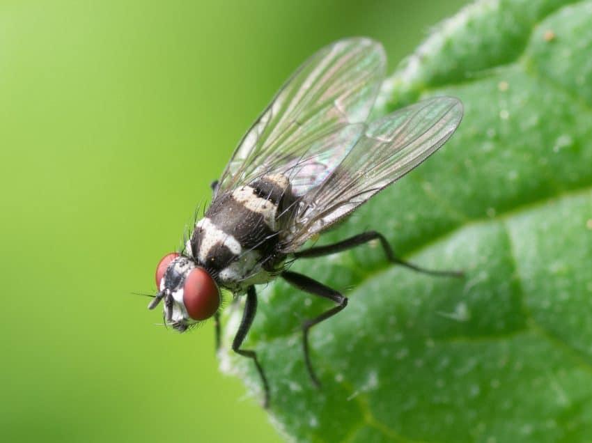 14 Cara Mengusir Lalat di Siang Hari yang Beterbangan di Rumah Terbukti Ampuh