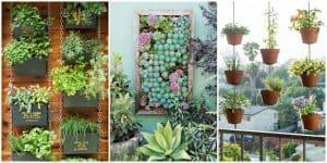 15 Jenis Tanaman Vertical Garden yang Cantik dan Asri