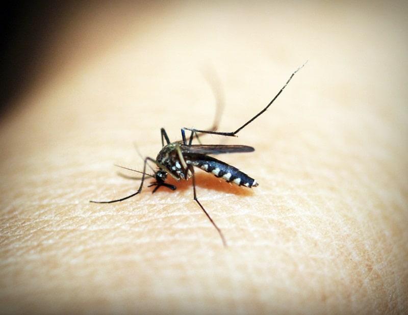 9 Penyebab Banyak Nyamuk di Kamar yang Jarang Disadari