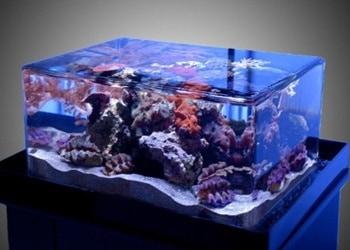 11 Cara Membersihkan Akuarium Akrilik agar Kinclong