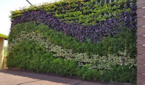 5 Cara Membuat Taman Dinding Dan Perawatannya Rumahlia Com
