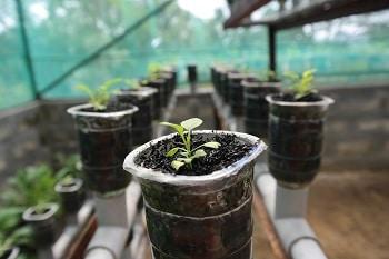 cara menanam hidroponik sederhana di rumah