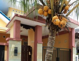 Pohon Kelapa Depan Rumah